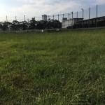 東港草刈06