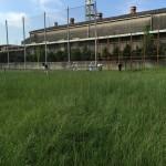東港草刈07